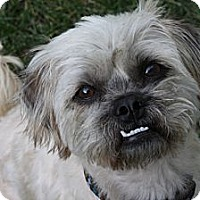 Adopt A Pet :: TOMMY - ADOPTION PENDING! - Los Angeles, CA