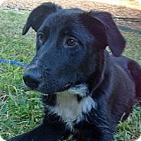 Adopt A Pet :: Lucas - Austin, TX