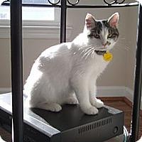 Adopt A Pet :: Amanda - Reston, VA