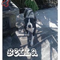 Adopt A Pet :: Bella - Geismar, LA