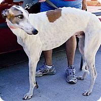 Adopt A Pet :: KB's Galvan - Cottonwood, AZ