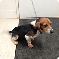 Adopt A Pet :: Nellie - Lancaster, VA