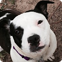 Adopt A Pet :: MAISEY - North Augusta, SC