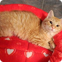 Adopt A Pet :: Carrot Cake - The Colony, TX