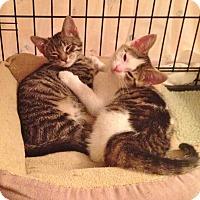 Adopt A Pet :: Ben - Horsham, PA