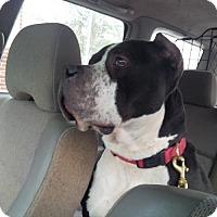 Adopt A Pet :: Cameron - Kimberton, PA