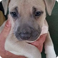 Adopt A Pet :: Walrus - Gainesville, FL