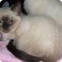 Adopt A Pet :: Daisy Dee-Adoption Pending! - Colmar, PA