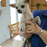 Adopt A Pet :: Sancho - Richardson, TX