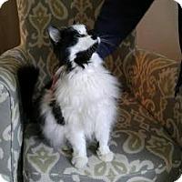 Adopt A Pet :: Sugar - Acushnet, MA