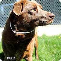 Adopt A Pet :: Molly - Appleton, WI