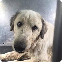 Adopt A Pet :: Mirabella - NY - Lee, MA