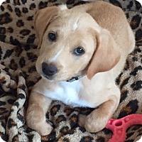 Adopt A Pet :: Harrison - PENDING - Grafton, WI