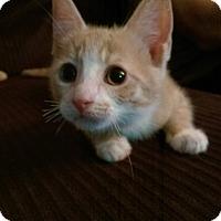 Adopt A Pet :: Hannah - North Brunswick, NJ