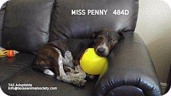 Australian Cattle Dog/Labrador Retriever Mix Dog for adoption in Spring, Texas - Miss Penny