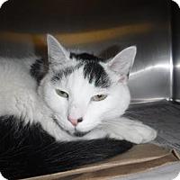 Adopt A Pet :: Cookie (PetCo Aramingo) - Philadelphia, PA
