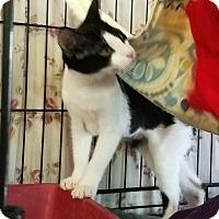 Adopt A Pet :: Harper - Fallbrook, CA