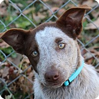 Adopt A Pet :: Ruby- ADOPTION PENDING - Cookeville, TN
