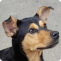 Shepherd (Unknown Type)/Husky Mix Dog for adoption in Ann Arbor, Michigan - A - PRINCESS