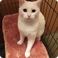 Adopt A Pet :: Bubbles - Butner, NC
