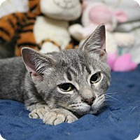 Adopt A Pet :: Smokey - Lindsay, ON