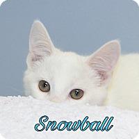 Adopt A Pet :: Snowball - Livonia, MI