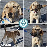 Adopt A Pet :: Boston - Kimberton, PA