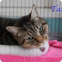 Adopt A Pet :: Taz - Bradenton, FL