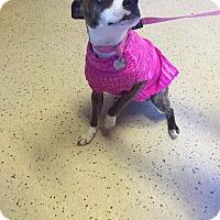 Adopt A Pet :: Jill (has been adopted) - Albany, NY