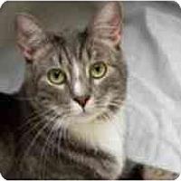 Adopt A Pet :: Prongs - Pasadena, CA