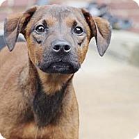 Adopt A Pet :: Murphy - Reisterstown, MD
