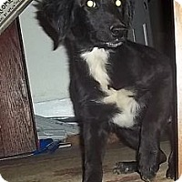 Adopt A Pet :: Janie - Staunton, VA