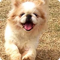 Adopt A Pet :: Maggie - Oklahoma City, OK