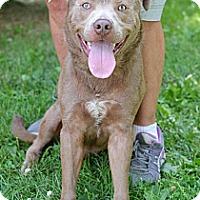 Adopt A Pet :: Albert - Springfield, IL