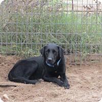 Adopt A Pet :: Blink - Cuero, TX
