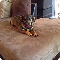 Adopt A Pet :: Buddy - Wyanet, IL