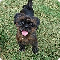 Adopt A Pet :: Jack Sparrow - San Antonio, TX