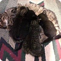 Adopt A Pet :: Sabrina - Caistor Centre, ON