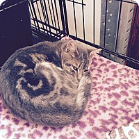 Adopt A Pet :: Laura - Speonk, NY