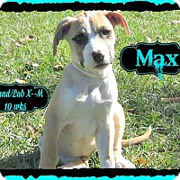 Adopt A Pet :: Max adoption pending - Manchester, CT