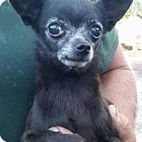 Adopt A Pet :: Bertie - Gainesville, FL