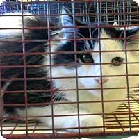 Adopt A Pet :: A673190 - Sacramento, CA