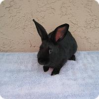 Adopt A Pet :: Jet - Bonita, CA