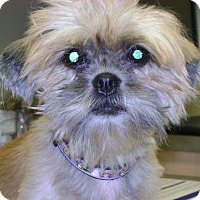 Adopt A Pet :: KELSEY ANN 15-718 - Griffith, IN