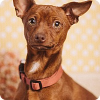 Adopt A Pet :: Beans - Portland, OR