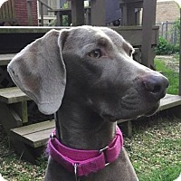 Adopt A Pet :: Jenna Faye - Birmingham, AL