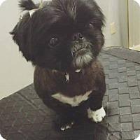 Adopt A Pet :: Maddie - Portland, ME