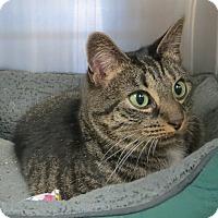 Adopt A Pet :: Tululah - Brockton, MA