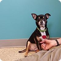 Adopt A Pet :: Mia - Houston, TX