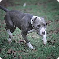 Adopt A Pet :: Deja - Tomball, TX